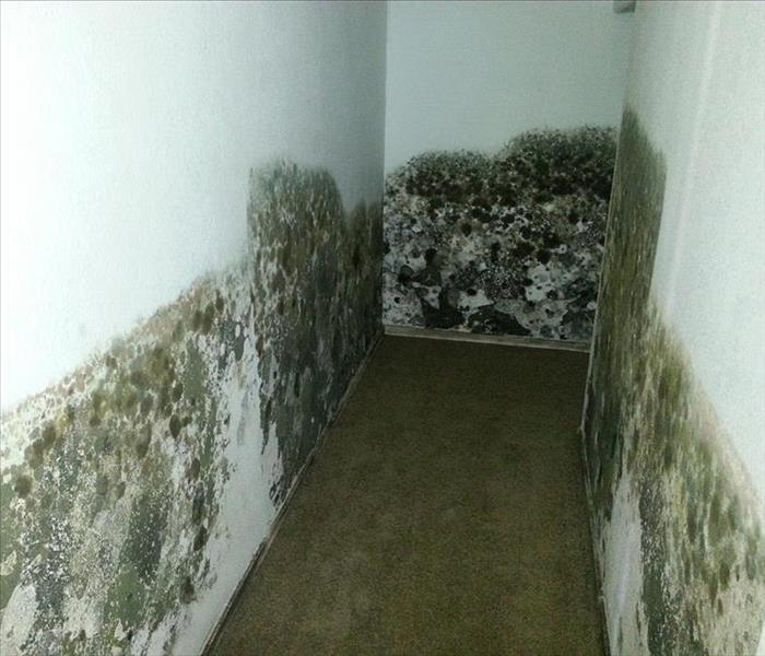 Mold Remediation MOLD, MOLD, EVERYWHERE, but when does it affect YOU?