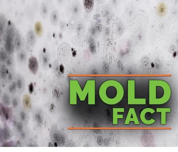 A picture of mold is shown with the words mold factss