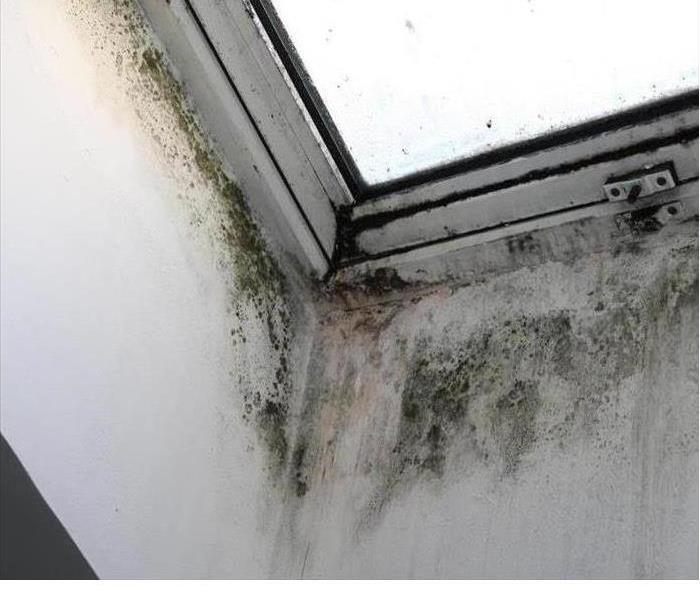 Mold is shown in the corner on a ceiling
